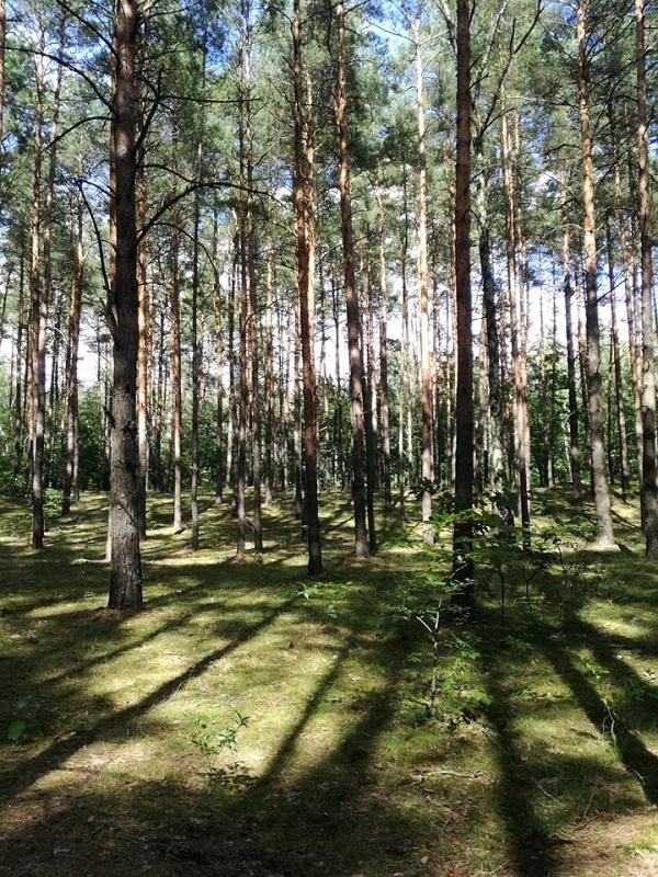Drzewa, las, natura, lifestyle